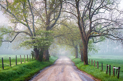 Great Smoky Mountains National Park Cades Cove Country Road Art Print by Dave Allen