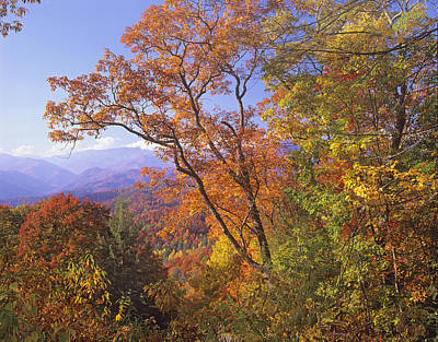 Photograph - Great Smoky Mts From Blue Ridge Pkwy by Tim Fitzharris