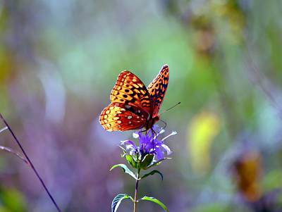 Photograph - Great Spangled Fritillary by Deena Stoddard