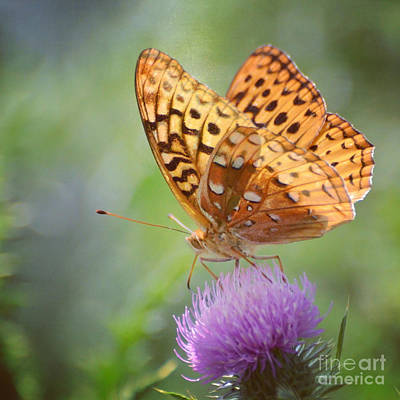 Butterfly Photograph - Great Spangled Fritillary by Kerri Farley