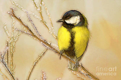 Titmouse Digital Art - Great Tit Perching On A Branch by Odon Czintos