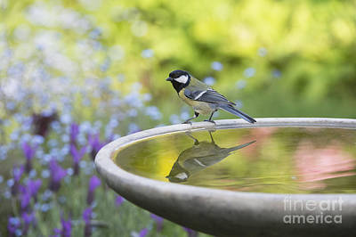 Bird Bath Photograph - Great Tit Reflection  by Tim Gainey