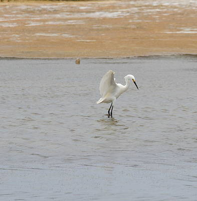 Crane Photograph - Great White Egret 10 by Cathy Lindsey