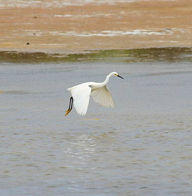 Crane Photograph - Great White Egret 13 by Cathy Lindsey