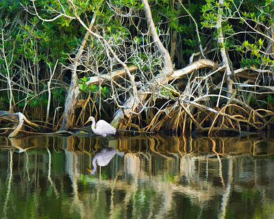 Great White Egret And Reflection In Swamp Mangroves Art Print