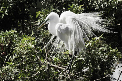 Photograph - Great White Egret Building A Nest Xi by Susan Molnar