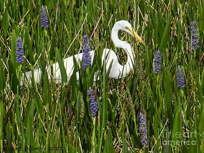 Photograph - Great White Egret by Grace Dillon