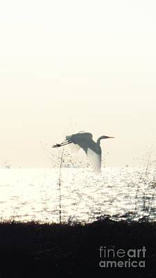 Egret Photograph - Great White Egret In Flight V2 by Scott Cameron