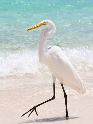 Ocean Photograph - Great White Egret by Jared Shomo