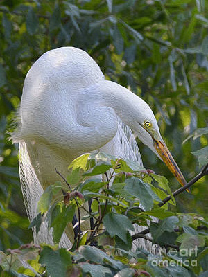 Photograph - Great White Egret  by Kathy Baccari