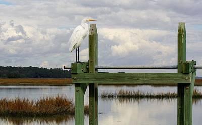 Great White Egret On The Marsh Art Print by Paulette Thomas