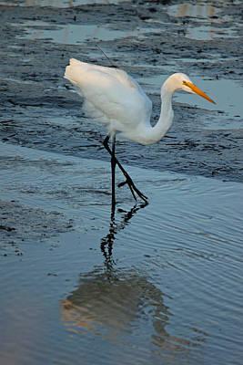 Great White Egret - Tiptoeing Through The Marsh Original by Suzanne Gaff