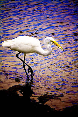 Photograph - Great White Heron by Gray  Artus