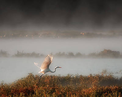 Great White Heron In Morning Mist Art Print