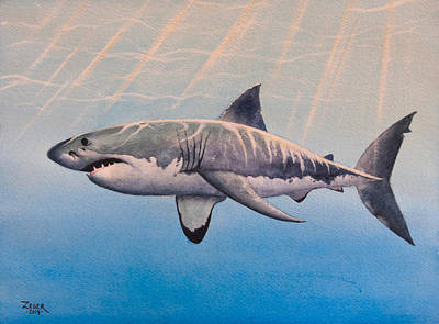 Shark Painting - Great White by James Zeger