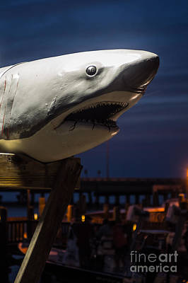 Photograph - Great White Shark  by Imagery by Charly