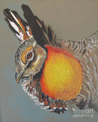Drawing - Greater Prarie Chicken by Nancy  Parsons