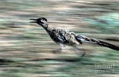 Roadrunner Photograph - Greater Roadrunner by Tierbild Okapia