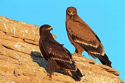 Greater Spotted Eagles Art Print by Bildagentur-online/mcphoto-schaef
