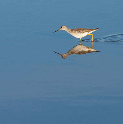 Photograph - Greater Yellowlegs by Melinda Fawver