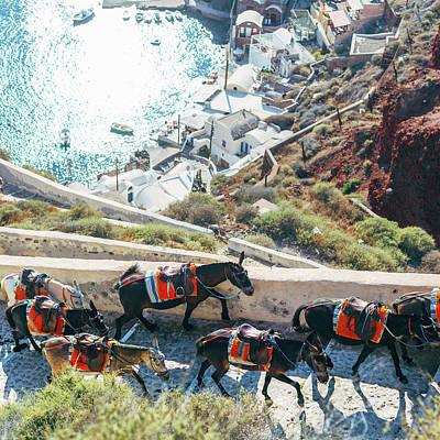 Photograph - Greece Donkey Santorini by Deimagine