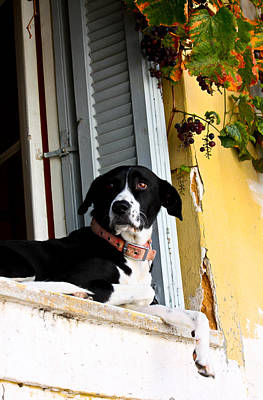 Photograph - Greek Dog by Anthony Doudt
