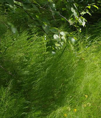 Photograph - Green 2 by Sheila Byers