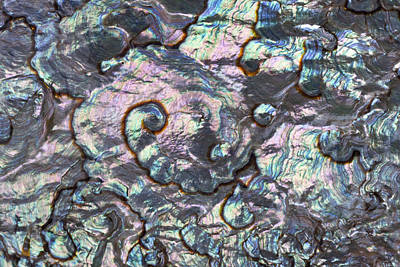 Abalone Wall Art - Photograph - Green Abalone Shell Interior From Baja by Ingo Arndt