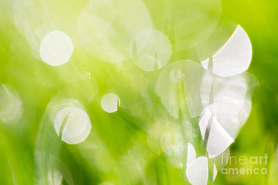 Green Abstract - Dewdrops In The Sunlit Grass 2 Art Print by Natalie Kinnear