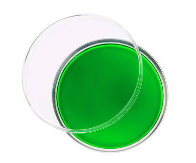 Agar Photograph - Green Agar Plate by Natural History Museum, London