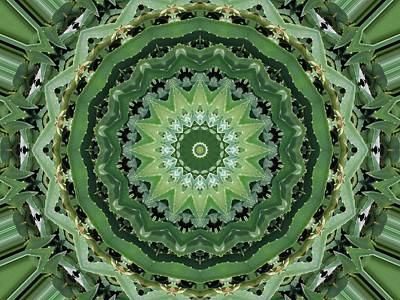 Photograph - Green Aloe Kaleidoscope by Sheri McLeroy
