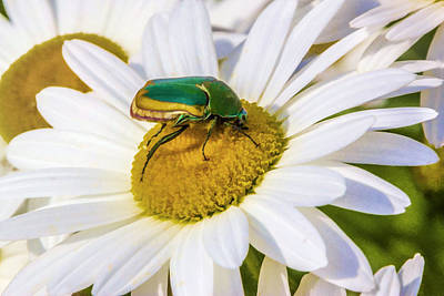 Digital Art - Green And Gold Beetle by Photographic Art by Russel Ray Photos