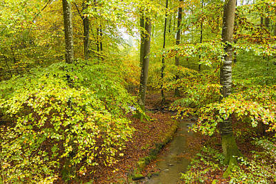 Photograph - Green And Red Colors In The Forest In Fall by Matthias Hauser