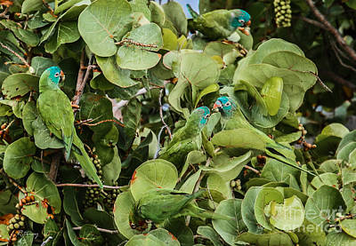 Photograph - Green And Teal Camouflage by Rene Triay Photography