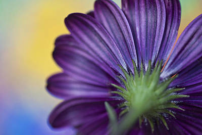 Photograph - Green And Violet by Al Hurley