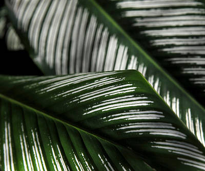Photograph - Green And White by Mark Sullivan
