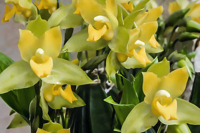 Digital Art - Green And Yellow Orchids by Photographic Art by Russel Ray Photos