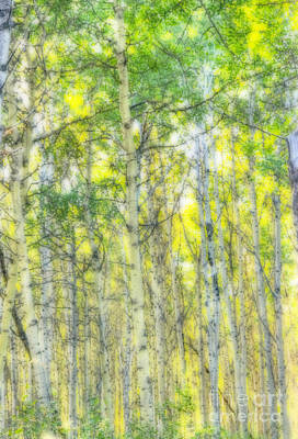 Photograph - Green And Yellow by Wanda Krack