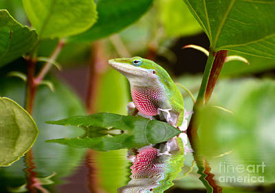 Photograph - Green Anole And His Reflection by Kathy Baccari