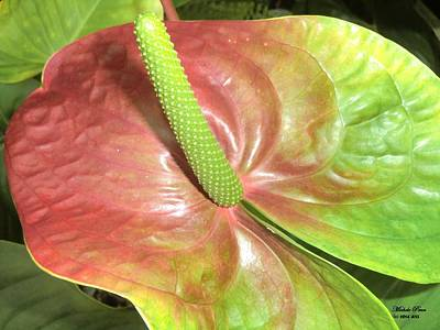 Photograph - Green Anthurium Glory  by Michele Penn