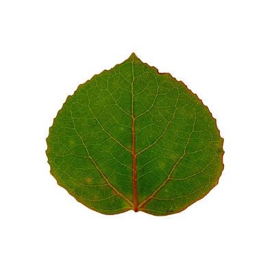 Digital Art - Green Aspen Leaf 7 by Agustin Goba