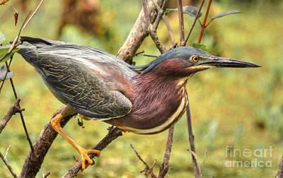 Photograph - Green Backed Heron At Magnolia by Kathy Baccari