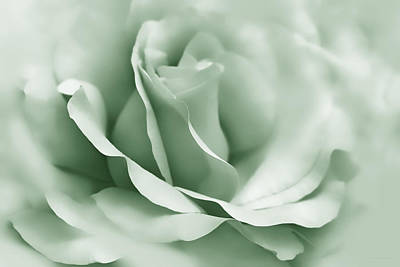Photograph - Green Ballerina Rose Flower by Jennie Marie Schell
