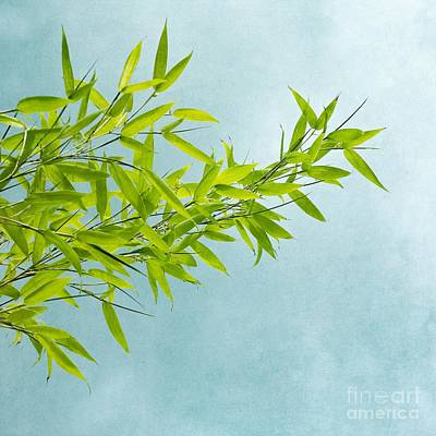 Wall Art - Photograph - Green Bamboo by Priska Wettstein