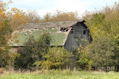 Photograph - Green Barn by Deborah Smolinske