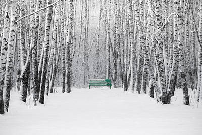 Snowstorm Photograph - Green Bench by Alexander Senin