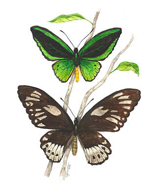 Painting - Green Birdwing Butterfly by Cindy Hitchcock