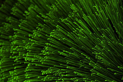 Photograph - Green Bristles by Robert Woodward