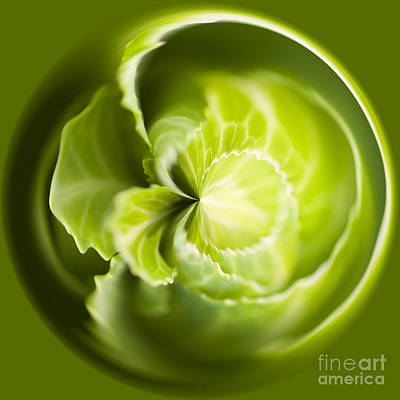 Manipulation Photograph - Green Cabbage Orb by Anne Gilbert