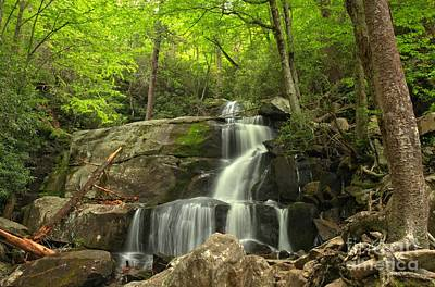 Photograph - Green Canopy Above Laurel Falls by Adam Jewell